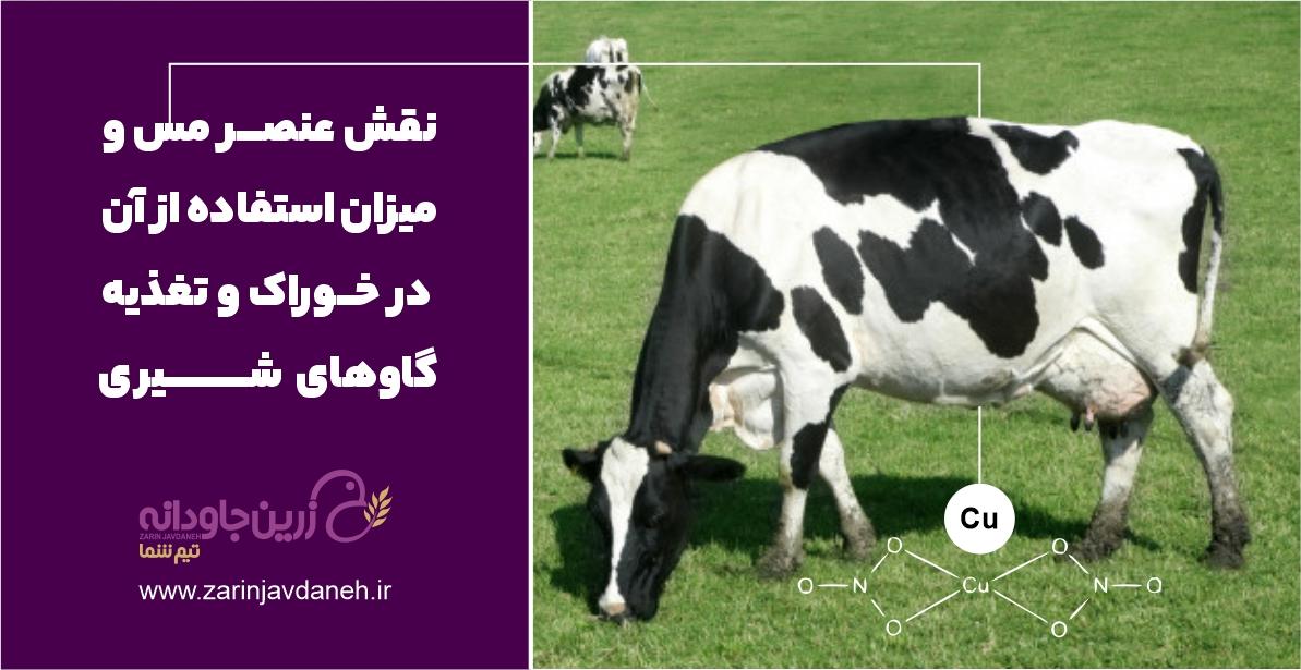 نقش عنصر مس در تغذیه گاو شیری