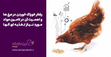 رفتار خوراک مرغ ها