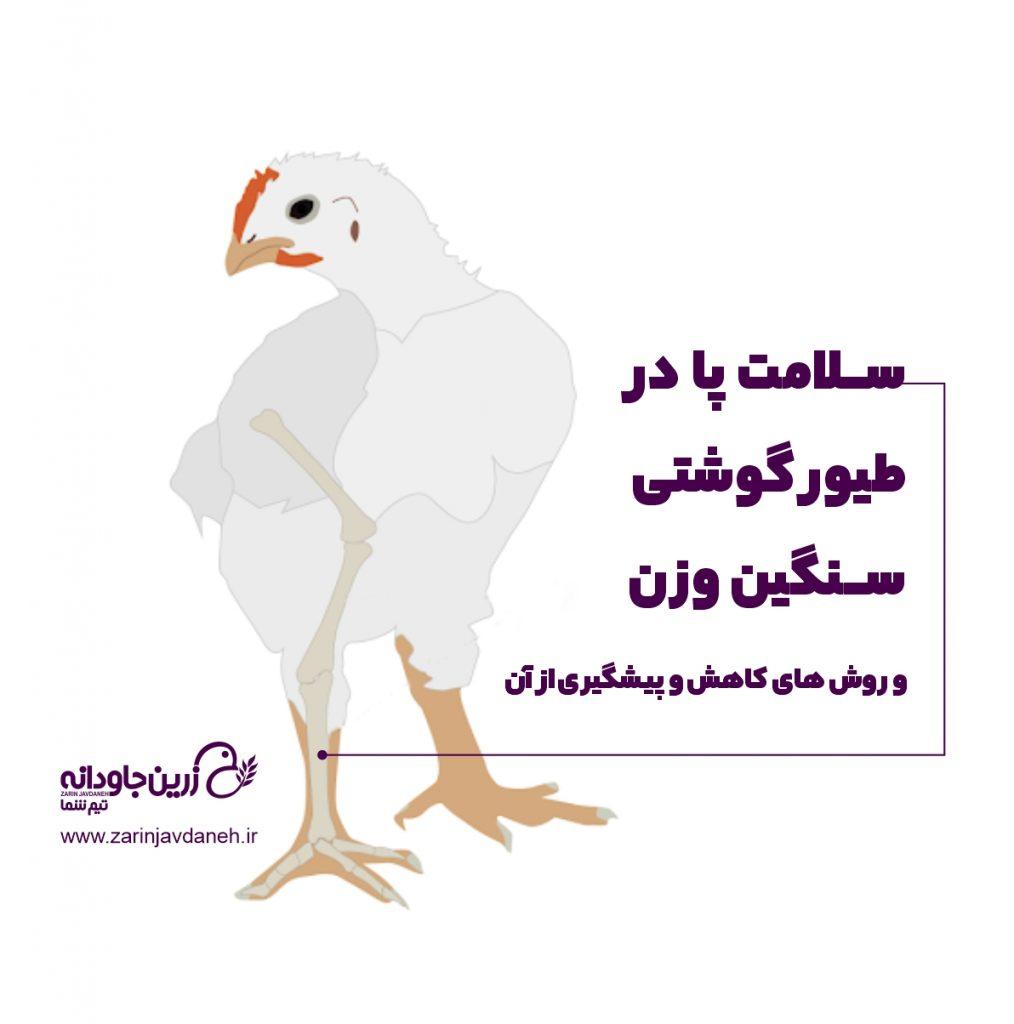 سلامت پا در طیور گوشتی و راه های درمان و پیشگیری