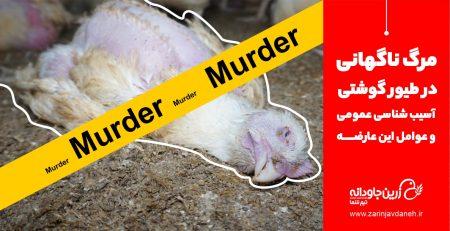 مرگ ناگهانی در طیور گوشتی