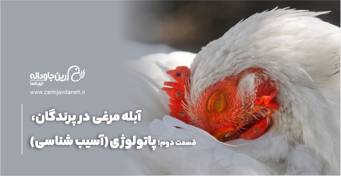 آبله مرغی در پرندگان