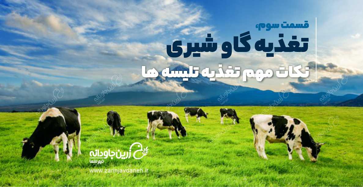 تغذیه گاو شیری