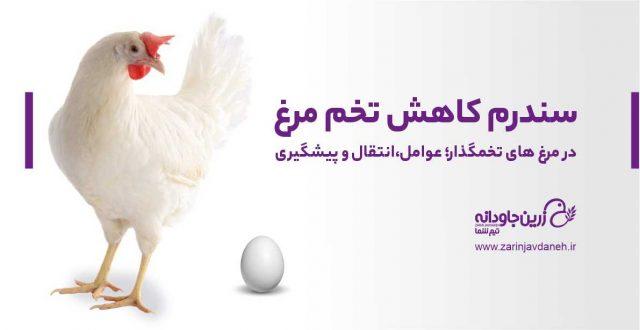 سندرم کاهش تخم مرغ