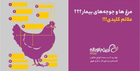 تشخیص بیماری مرغ ها