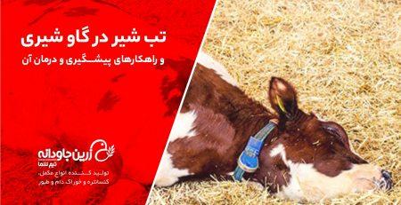 تب شیر در گاو شیری