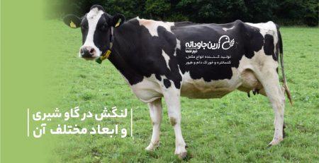 لنگش در گاو شیری