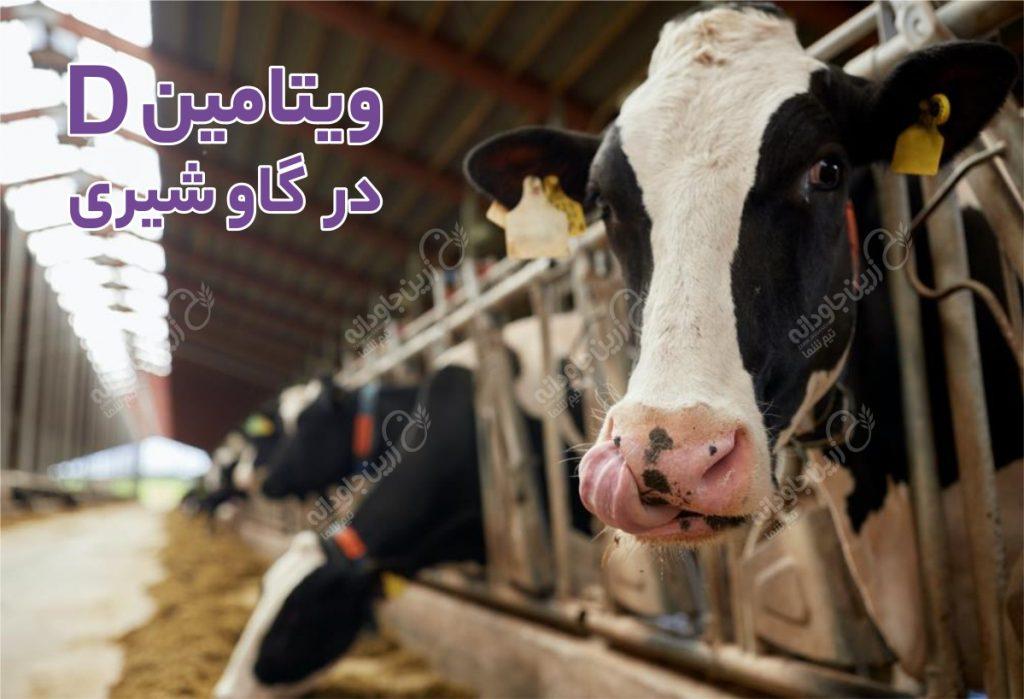 ویتامین Dدر گاو شیری