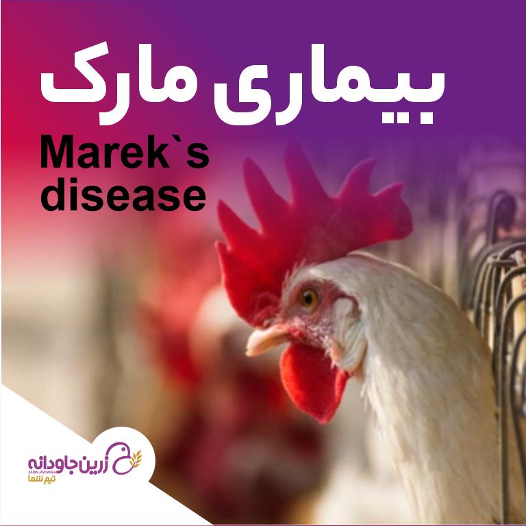 بیماری مارک
